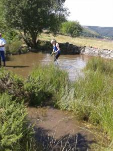 Ferndale Pond Clerance 3